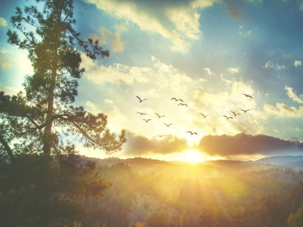 SUNRISE: Wish to enjoy a spectacular sunrise, sunset? We'll tell you where  to go - The Economic Times